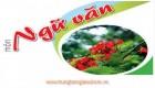 trung_tam_gia_su_hcm_01_1
